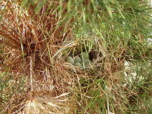 Bird's Nest Alameda May 12 2005